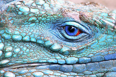 Blue Eyes Photograph - In His Eye by Iryna Goodall