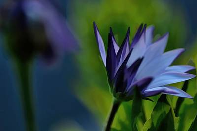 Photograph - In Kayes Front Yard by Diana Mary Sharpton