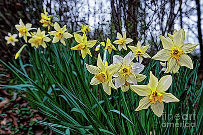 Photograph - In Line For Spring by Paul Mashburn