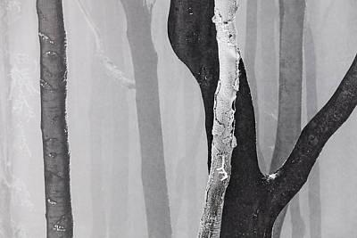 In Love Art Print by Evgeni Dinev