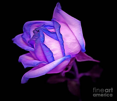 Purple Rose Photograph - In Love by Krissy Katsimbras