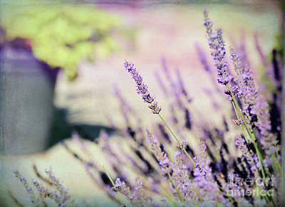 Photograph - In Love With Lavender by Kerri Farley