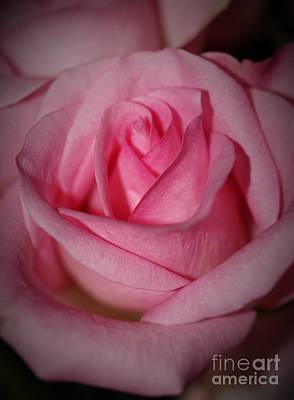 Petals Photograph - In Love With Pink by Mesa Teresita