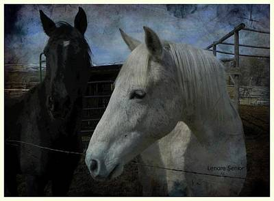 Photograph - In Memory Of Greyboy by Lenore Senior and Dawn Senior-Trask