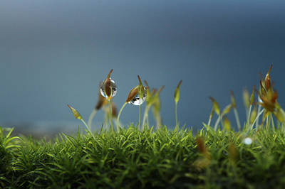 Lilliput Photograph - In Moss World .. Rain by Connie Handscomb