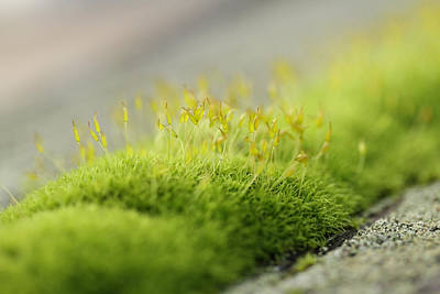 Coastal Forest Photograph - In Moss World .. Sunshine On The Ridge by Connie Handscomb