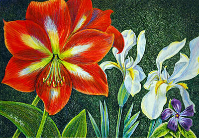 Amaryllis Drawing - In My Garden by Suzanne McKee