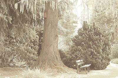 Photograph - In Old Park. Gentle Winter by Jenny Rainbow