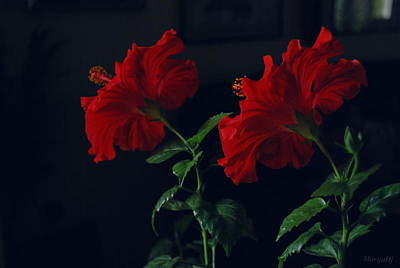 Photograph - In Pair by Marija Djedovic