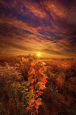 Photograph - In Perfect Solitude There Is Grace by Phil Koch