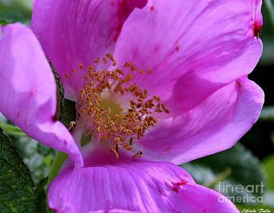 Photograph - In Pink by Elfriede Fulda