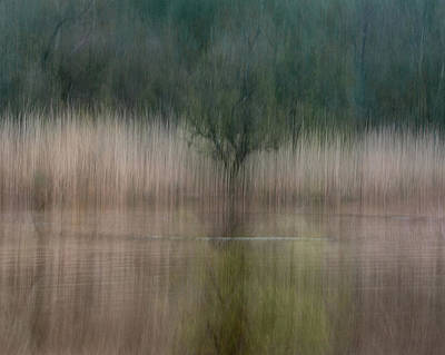 Intentional Camera Movement Photograph - In Reeds by Chris Dale