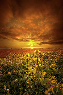 Photograph - In Remembrance by Phil Koch