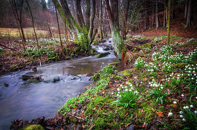Photograph - In Spring Wilderness With Snowdrops by Jenny Rainbow