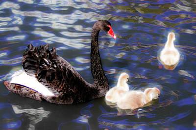 Photograph - In Swan's Dream by Miroslava Jurcik
