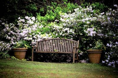 Photograph - In The Azalea Garden by Maria Urso