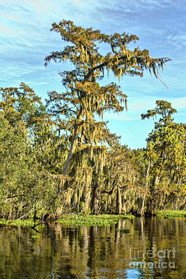 Photograph - In The Bayou by Steven Parker