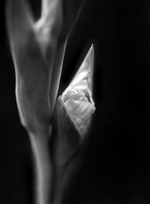 Photograph - In The Beginning Gladiola Flower Bud Monochrome by Jennie Marie Schell
