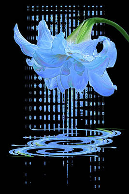 Photograph - In The Cool Of The Night 3 - Blue Amaryllis by Gill Billington