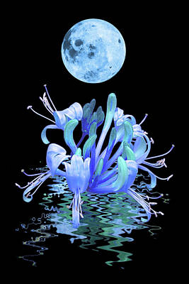 Photograph - In The Cool Of The Night 2 Honeysuckle Blue Moon by Gill Billington