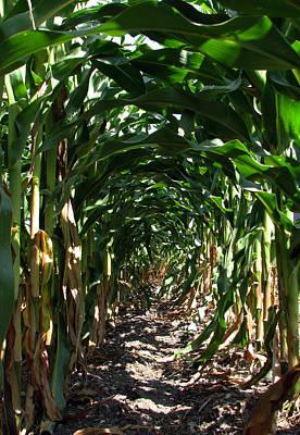 In The Corn  Art Print