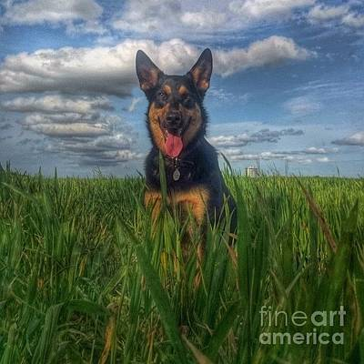 Dog Photograph - In The Country. #dogs  #gsd by Isabella F Abbie Shores FRSA