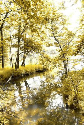 Dappled Light Photograph - In The Creek by Sharon Popek