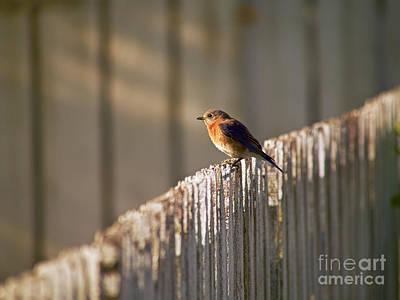 Garden Fruits - Bluebird In the Dawning Light by Rachel Morrison