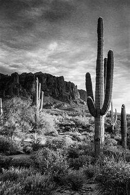 Photograph - In The Desert Golden Hour In Black And White  by Saija Lehtonen