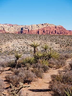 In The Desert Print by Rae Tucker