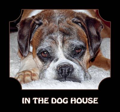 The Dog House Photograph - In The Dog House - Black by Gill Billington