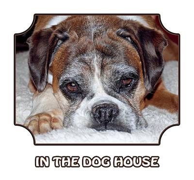 Photograph - In The Dog House - White by Gill Billington