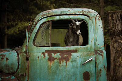 Photograph - In The Drivers Seat by Daniel Houghton