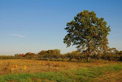 Freehold Photograph - In The Field - Battlefield Orchards by Angie Tirado