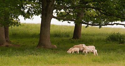 Photograph - In The Field by Joye Ardyn Durham