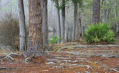 Palmetto Plants Photograph - In The Florida Pines by Tyler Findley
