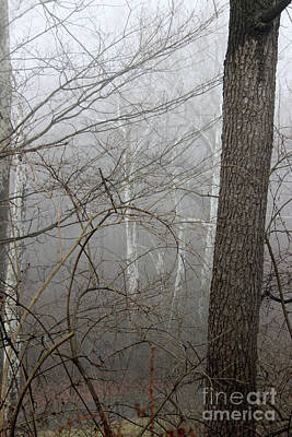 Photograph - In The Fog by Karen Adams
