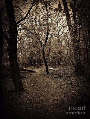 Photograph - In The Forest by Cendrine Marrouat