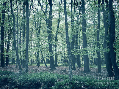 Photograph - In The Forest by Patricia Hofmeester