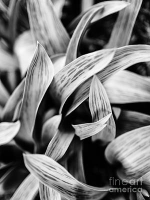 In The Garden _ Tulip Leaves Art Print