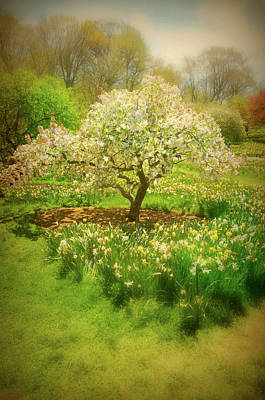 Photograph - In The Garden by Diana Angstadt