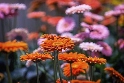 Gerbera Photograph - In The Garden by Garry Gay