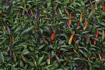 Photograph - In The Garden - Ornamental Peppers by Nadalyn Larsen