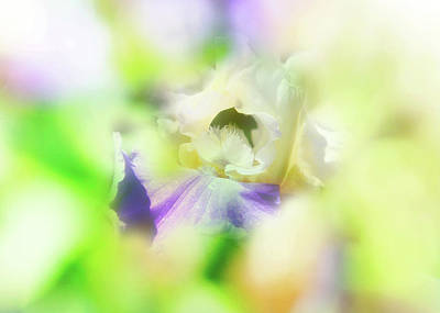 Abstract Flowers Images Photograph - In The Garden by Toni Hopper