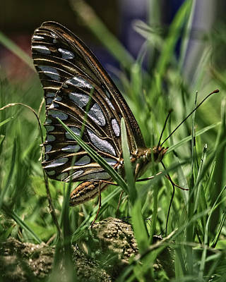 Photograph - In The Grass by Philip A Swiderski Jr