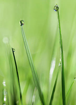 Photograph - In The Grass by Rebecca Cozart