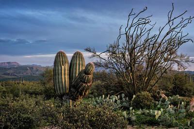 Photograph - In The Green Desert  by Saija Lehtonen