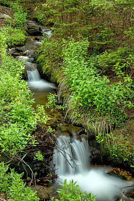 Photograph - In The Green Refreshing Wilderness by James BO Insogna