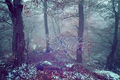 Photograph - In The Heart Of Blue Woods by Jenny Rainbow