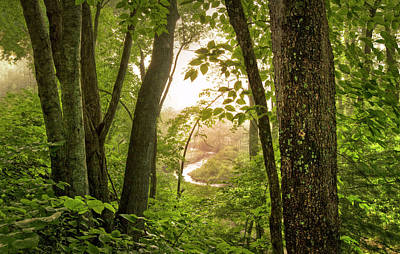 Photograph - In The Heart Of The Forest by Debra and Dave Vanderlaan